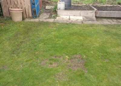 cleaned garden area